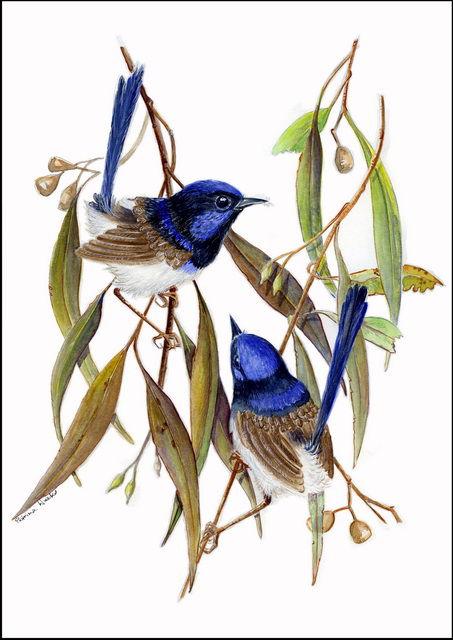 central australian wild flower art