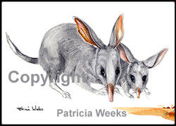 BlackEdge-8x72Bilby1.jpg