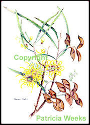 BlackEdge-8x72Hakea.jpg